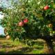Bearing Fruit Image